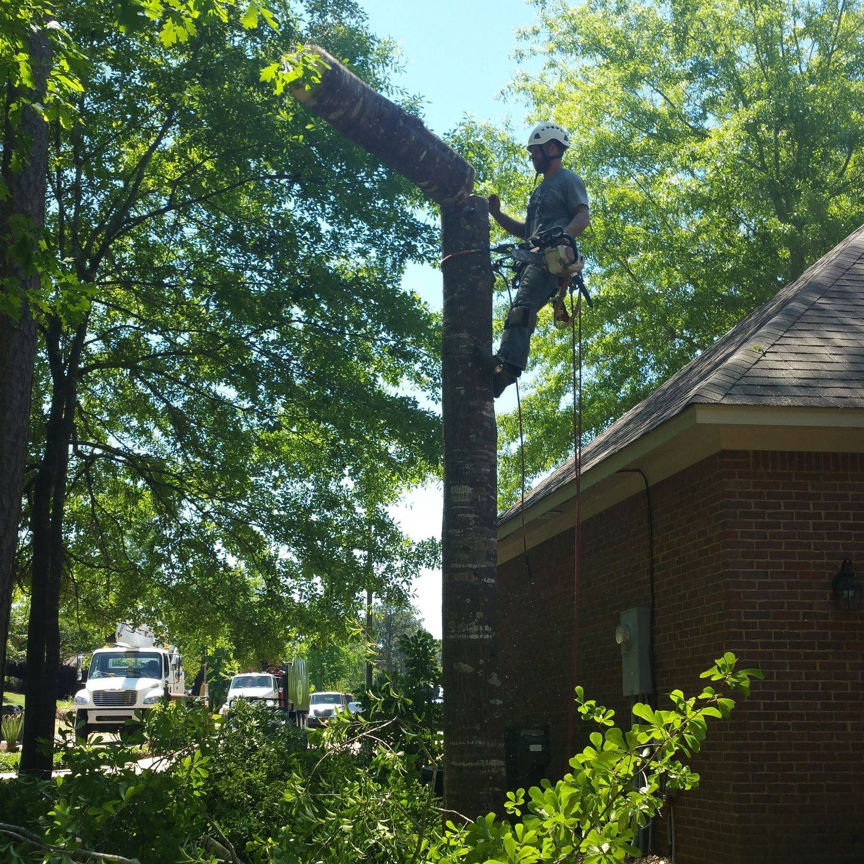 barone stree pros worker climbing tree